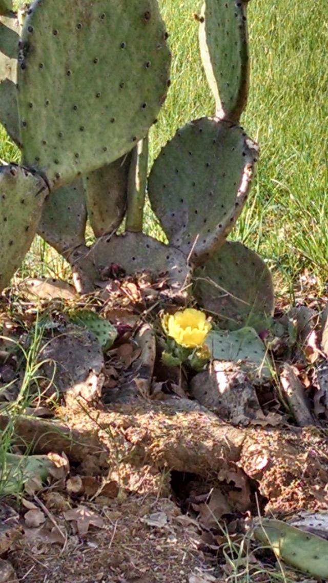 cactus bloom 2