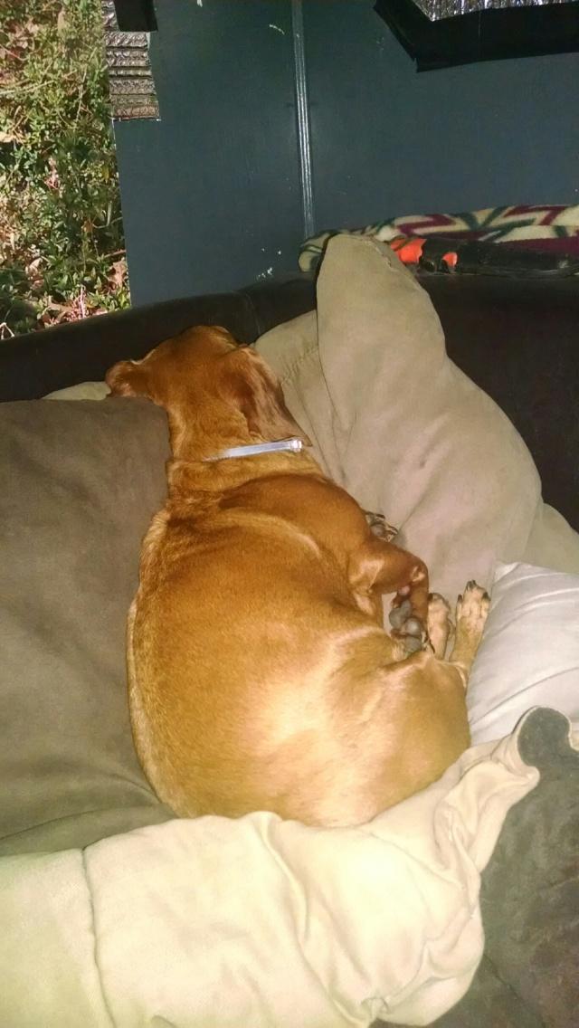 mollie on poppy's pillows