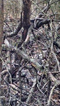 fallen-tree-zoom