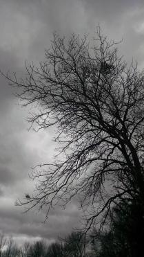 grey-skies