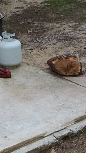 the-tree-stump