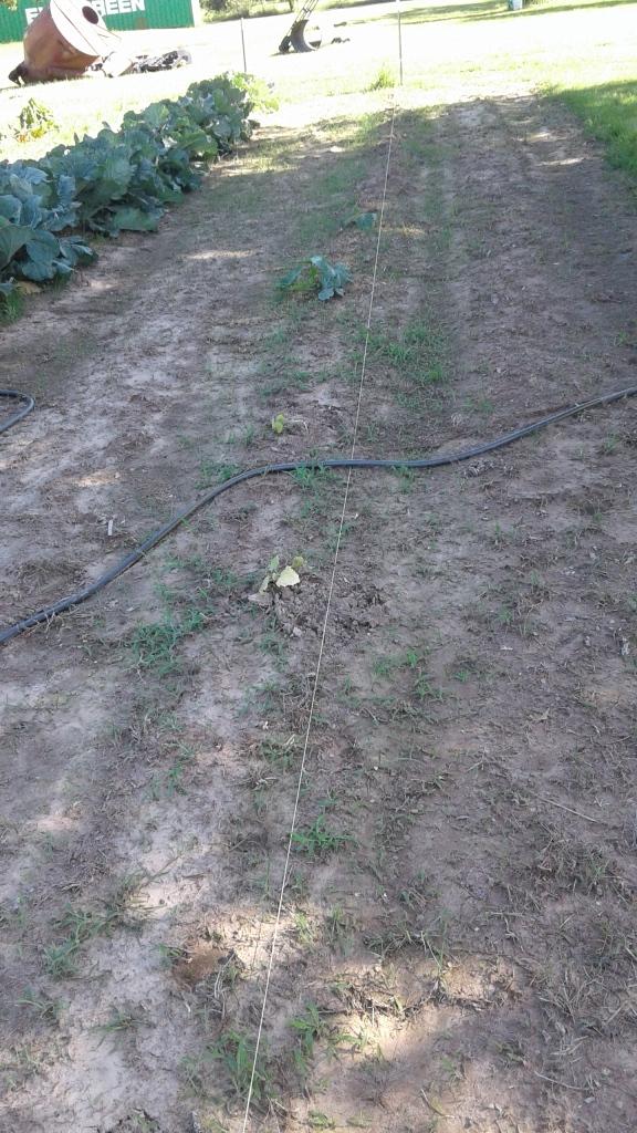 planted squash