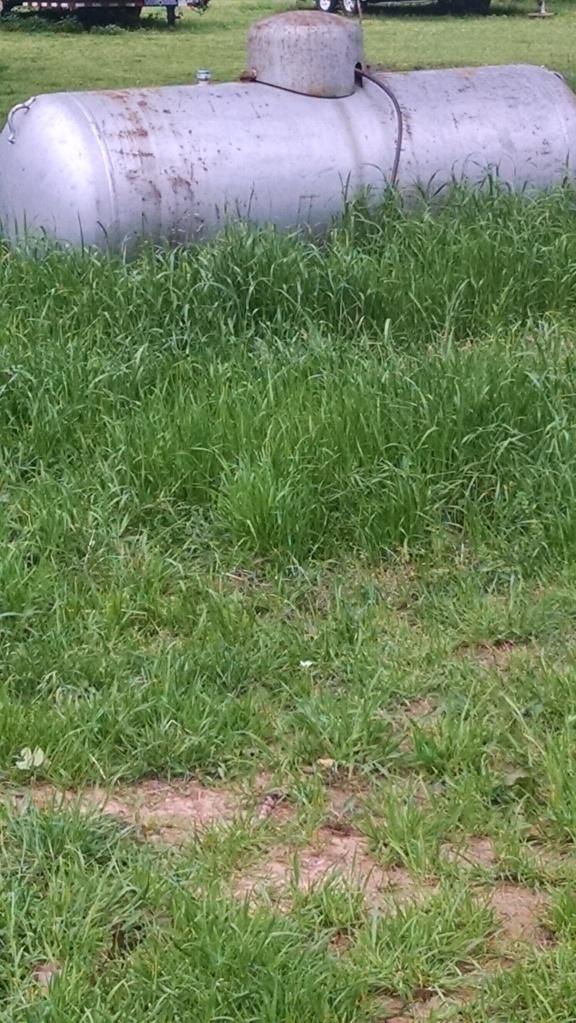 very tall grass